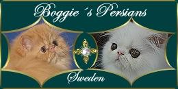 Boggie's Persians